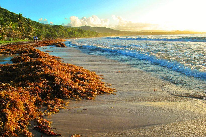 Martinique_2_Čudovita obala na otoku Martinique