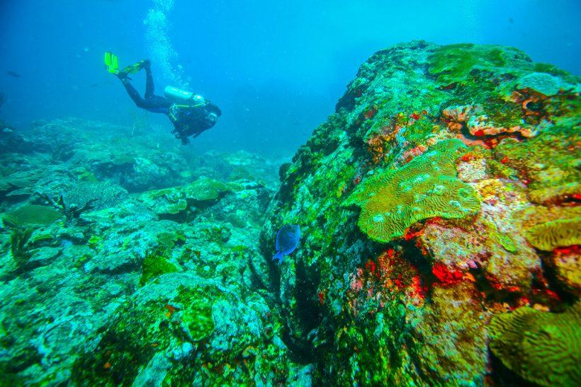 Tobago_2_Čudovit koralni greben v vodah ob obtočju Tobago Cays