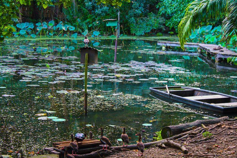 Trinidad_2_Favna in flora v Wild Fowl Trust-u