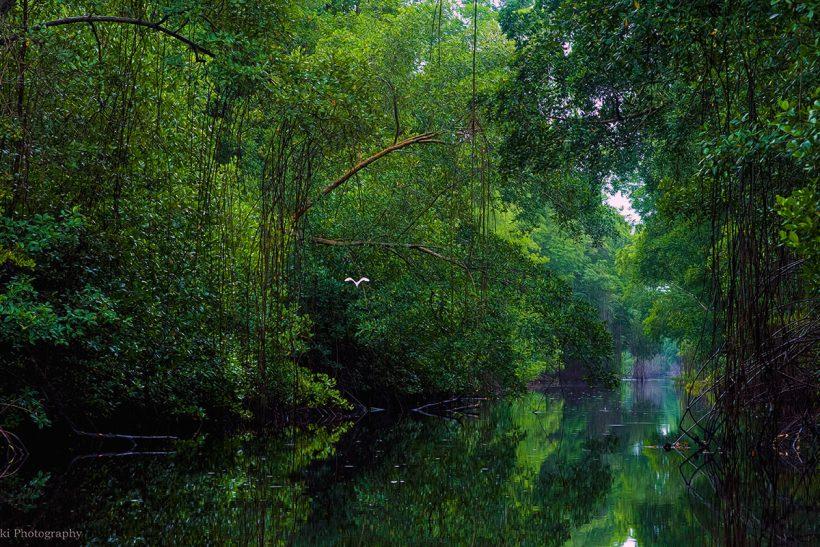 Trinidad_2_Prelepa narava v naravnem rezervatu Caroni