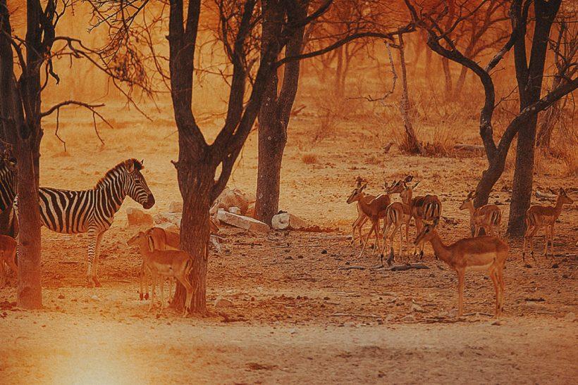 Hisa Potovanj J Afrika Zivali 70 Zebra Antilope