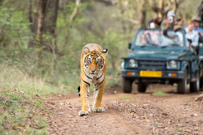 Hisa Potovanj Indija Ranthabore 2002 Safari 1