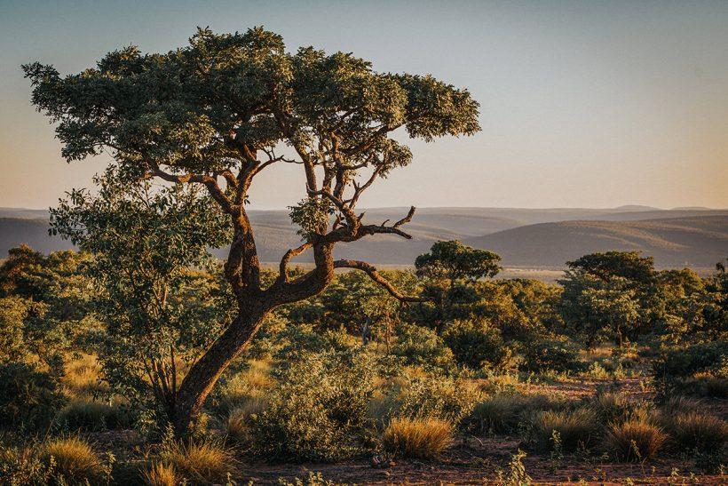 Hisa Potovanj J Afrika Narava 47