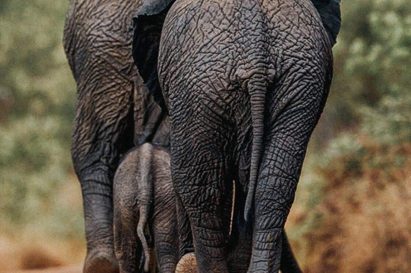 Hisa Potovanj J Afrika Zivali 57 Sloni 5