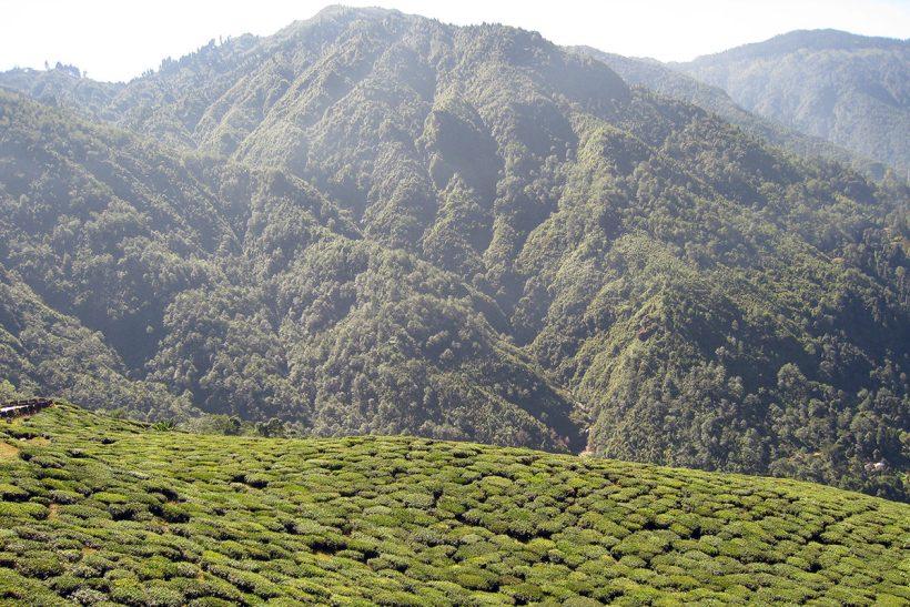 Hisa Potovanj Darjeeling Sikkim Kalkuta 08
