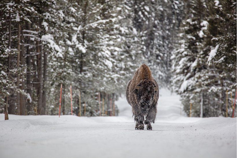 Hisa Potovanj Narodni Parki ZDA In Kanade 02