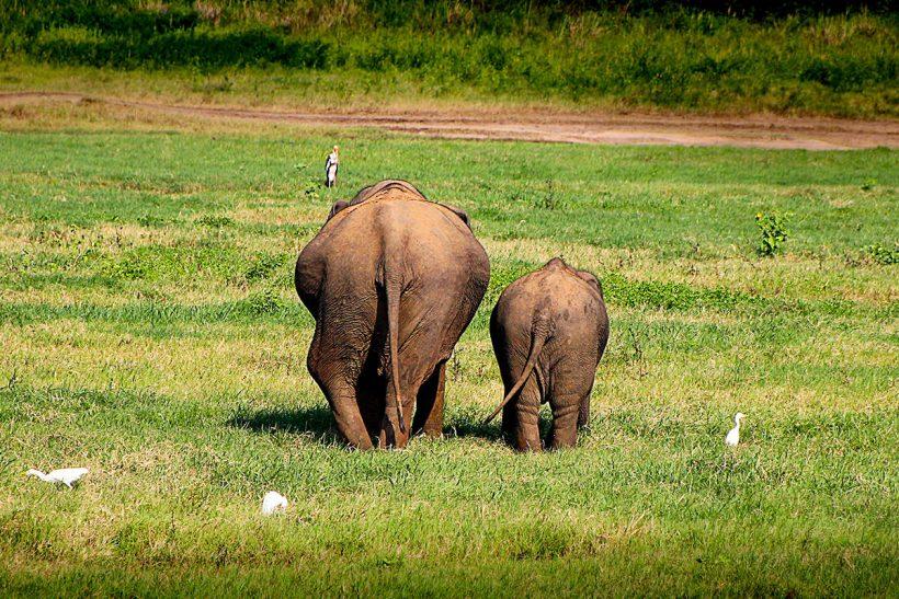 Hisa Potovanj Sri Lanka 15