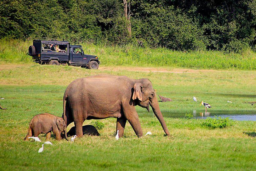 Hisa Potovanj Sri Lanka 16